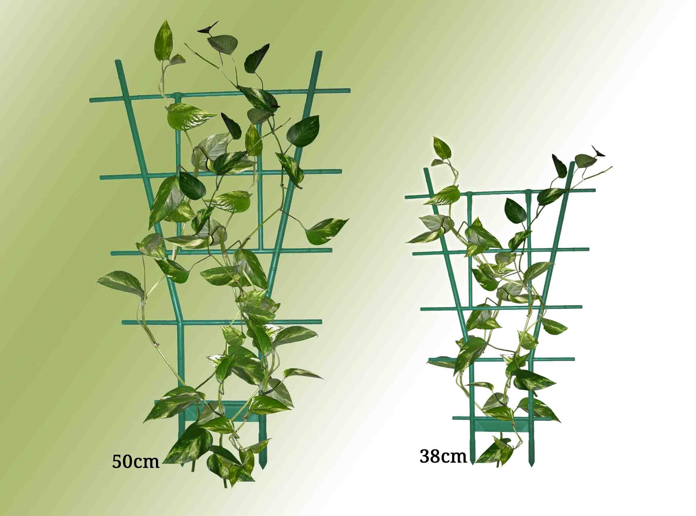 Acheter des plantes semer des plantes vivaces plut t que for Acheter plante